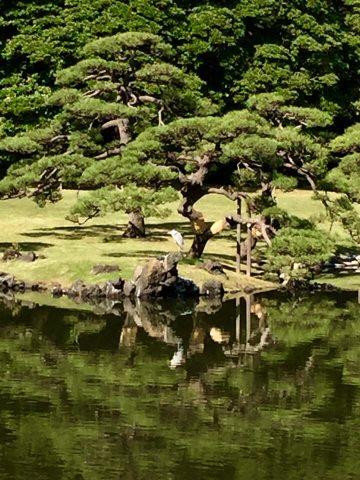 Heron in a Tokyo Park