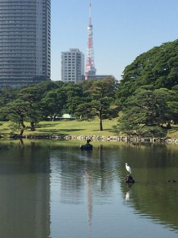 Heron in a Tokyo Garden.